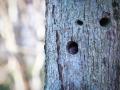 veverica stromová, 27.3.2019