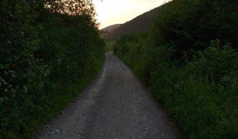 Cesta od obce k Mníšej doline, husto zarastená