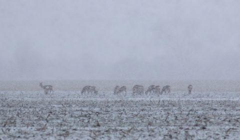 husté sneženie